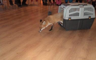 liška Mia - podzimníčci vánoční besídka 133 380x240