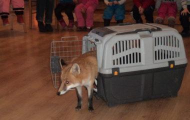 liška Mia - podzimníčci vánoční besídka 134 380x240