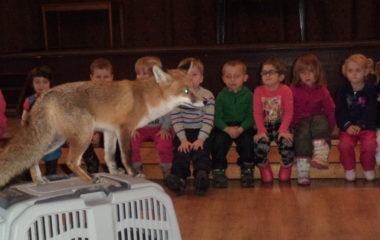 liška Mia - podzimníčci vánoční besídka 137 380x240
