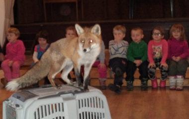 liška Mia - podzimníčci vánoční besídka 138 380x240