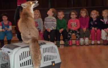 liška Mia - podzimníčci vánoční besídka 140 380x240