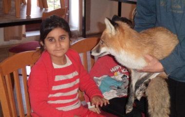 liška Mia - podzimníčci vánoční besídka 149 380x240