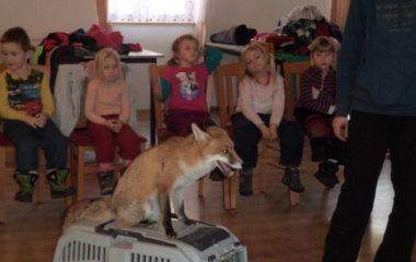 liška Mia - podzimníčci vánoční besídka 153 380x240