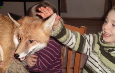 liška Mia - podzimníčci vánoční besídka 159 380x240