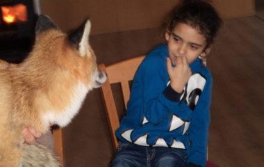 liška Mia - podzimníčci vánoční besídka 162 380x240