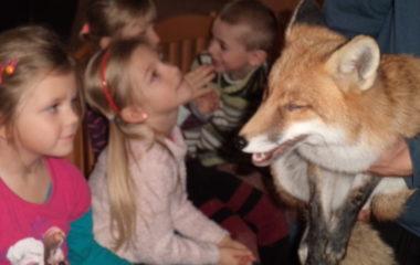 liška Mia - podzimníčci vánoční besídka 175 380x240