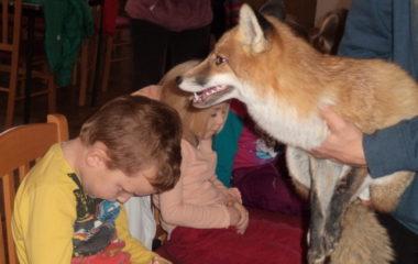 liška Mia - podzimníčci vánoční besídka 176 380x240