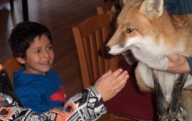 liška Mia - podzimníčci vánoční besídka 182 380x240