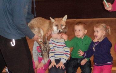 liška Mia - podzimníčci vánoční besídka 184 380x240