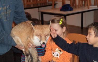 liška Mia - podzimníčci vánoční besídka 187 380x240